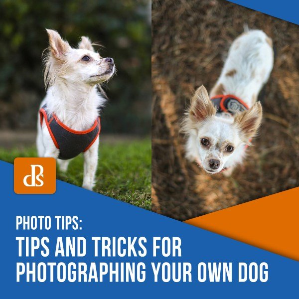 Tips and Tricks for Photographing Your Own Dog