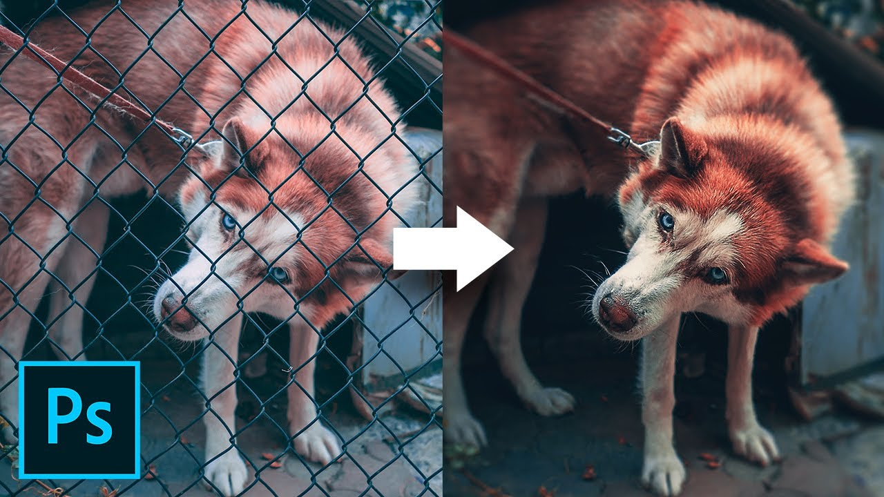 How to Remove a Fence From Your Photo in Just 3 Steps in Photoshop (video)