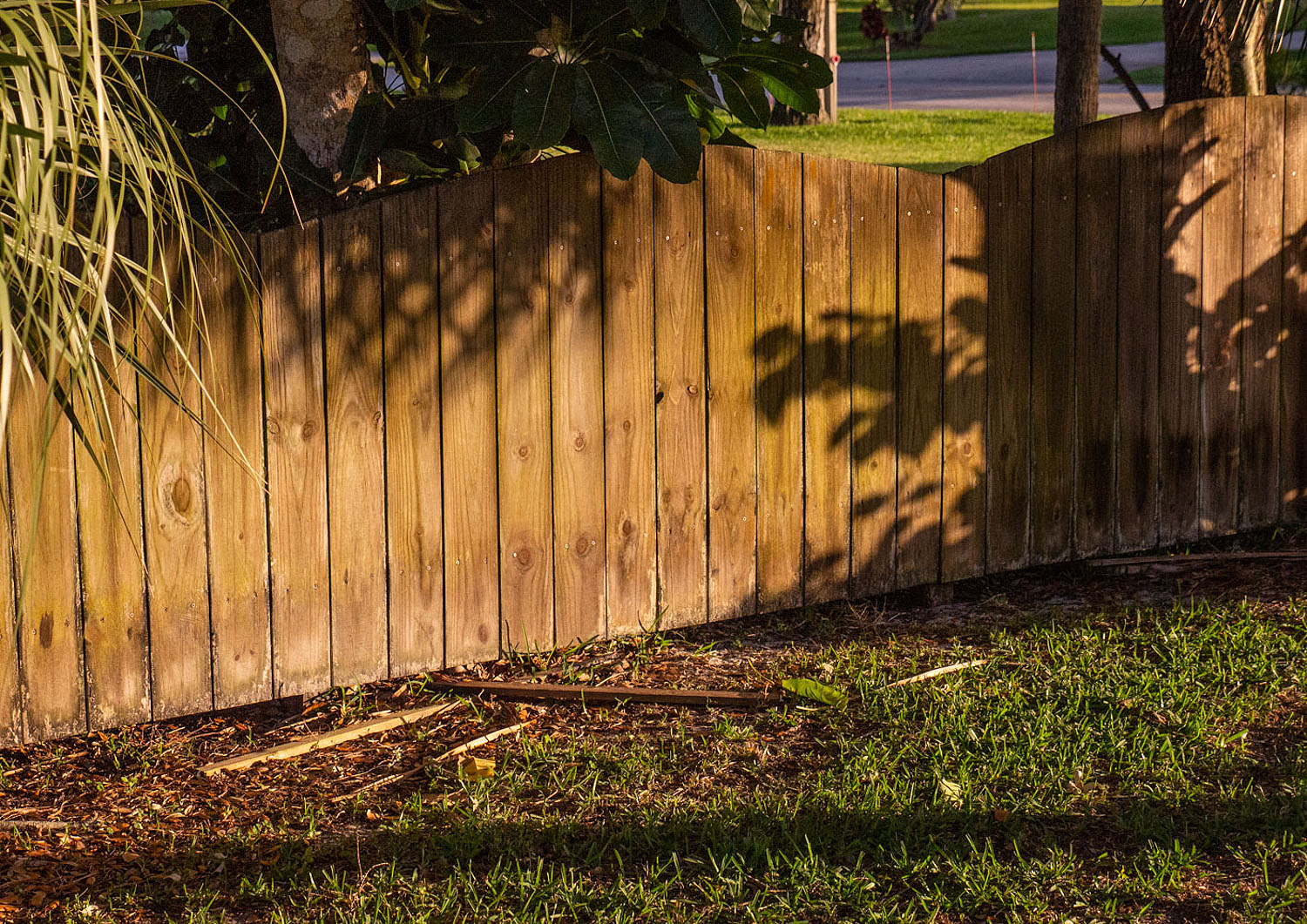 "Image: Even this faded wood fence took on a golden color during ""golden hour."" f-4.5, 1/4000, ISO 16..."