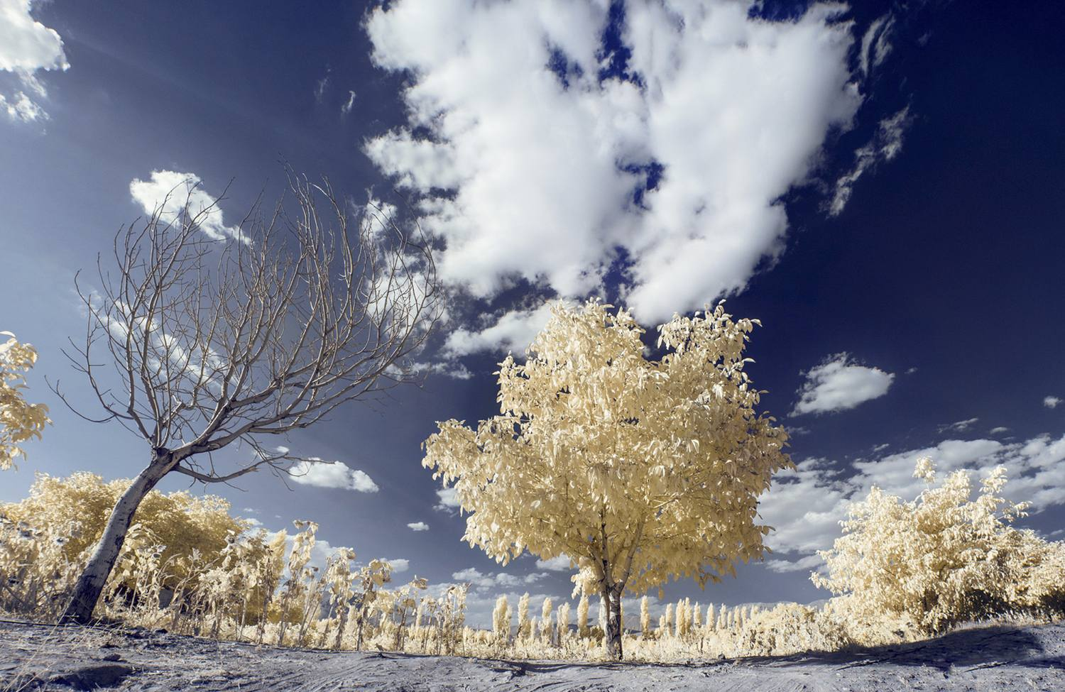 Color Infrared