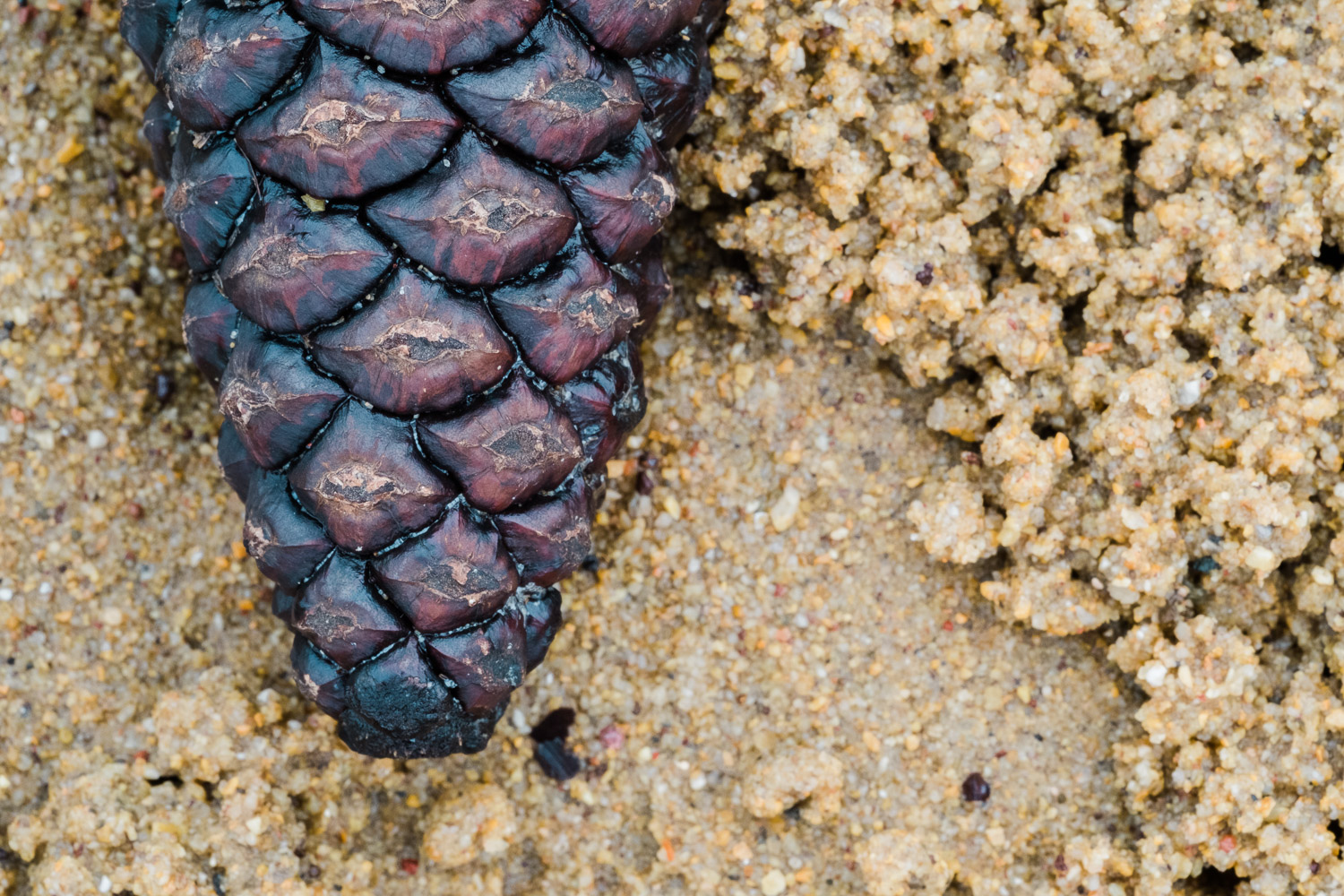 Image: I took the lens down to my local beach to see what I could photograph up close. Pine cone on...