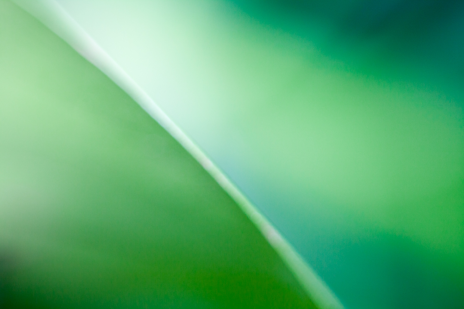 photography ideas for when you are stuck indoors plant abstract