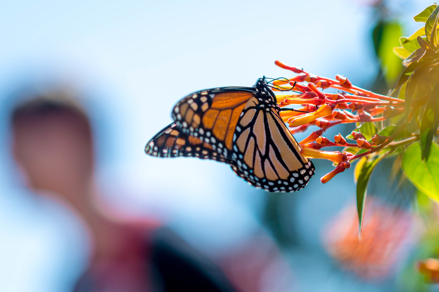 why dedicated cameras are better than smartphones-butterfly