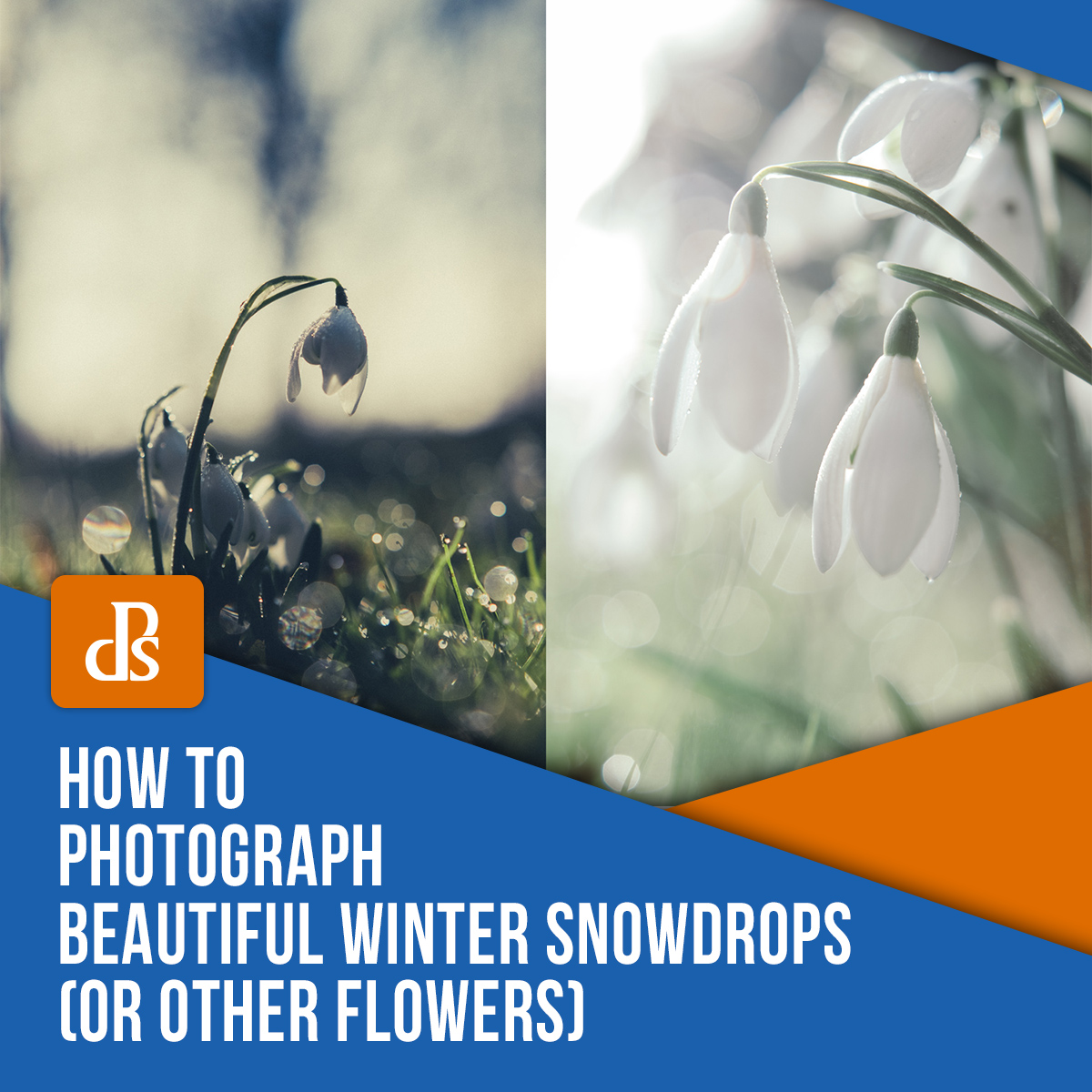 how-to-photograph-winter-snowdrops-flowers