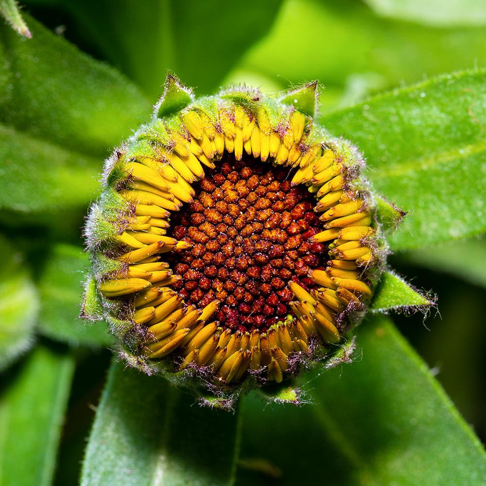 Weekly Photography Challenge – Green