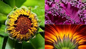 How to Take Vibrant, Razor-Sharp Macro Photos of Flowers