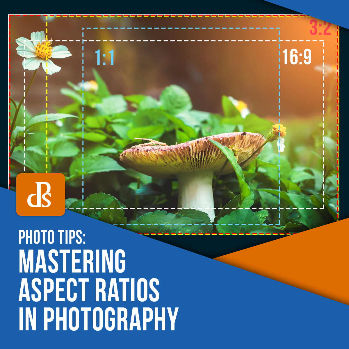 mastering aspect ratios in photography featured image