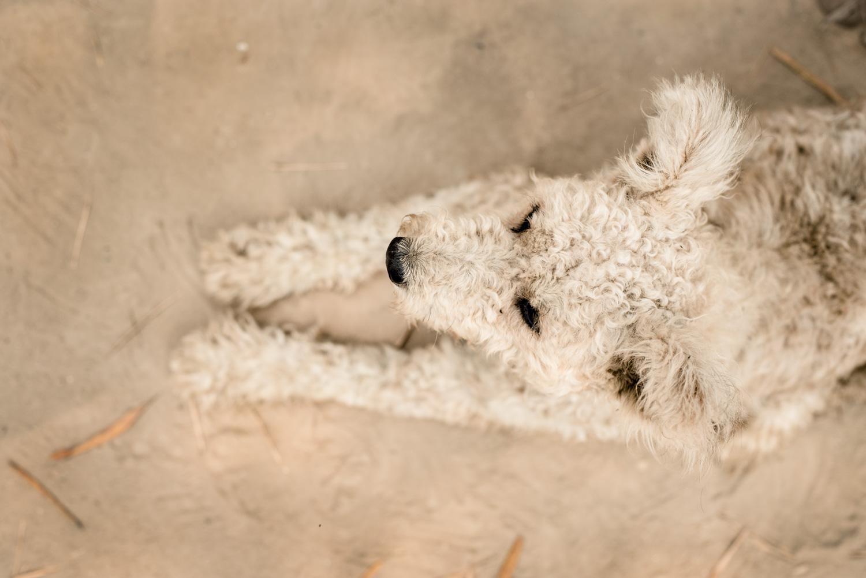 olhando para um cachorro no chão para expor suas fotos
