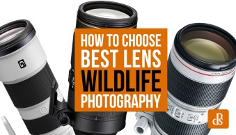 How to Choose the Best Lens for Wildlife Photography