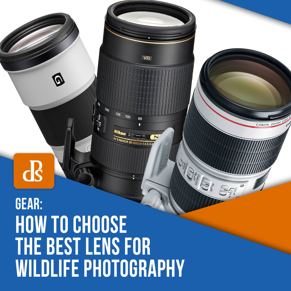 How to Choose the Best Lens for Wildlife Photography Featured image