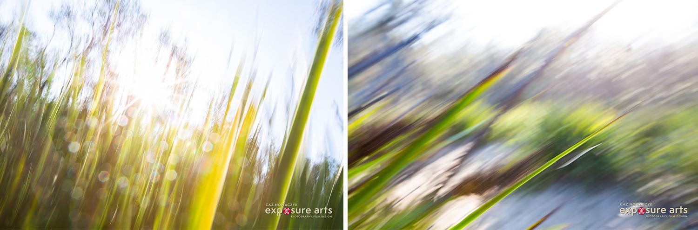 Weekly Weekly Challenge - ICM - movimento intencional da câmera com grama verde e sol ao fundo
