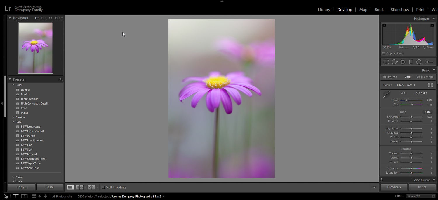 flower image with gradient applied - post-processing effects