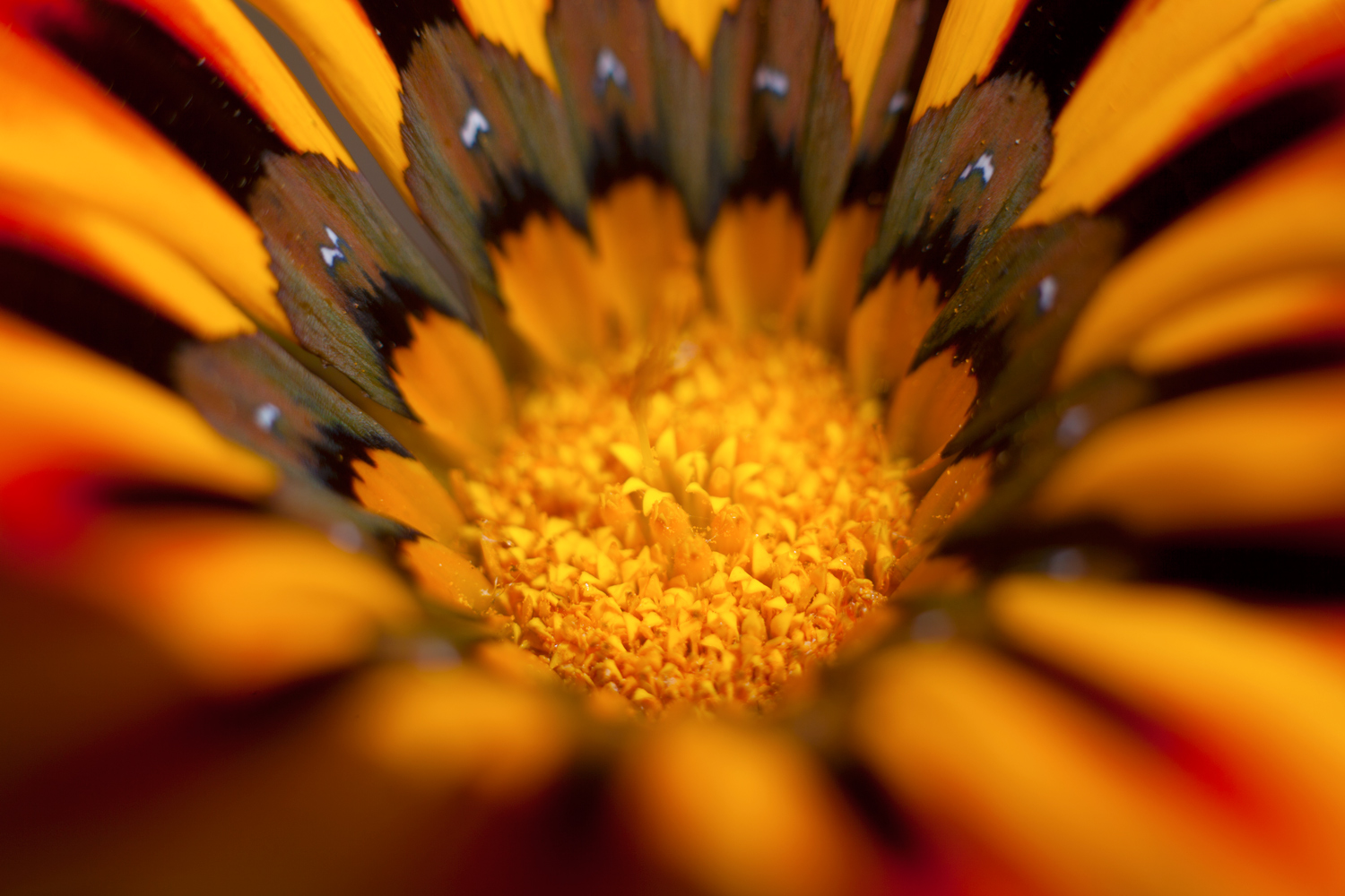 create mandalas in photoshop with stack modes flower close up