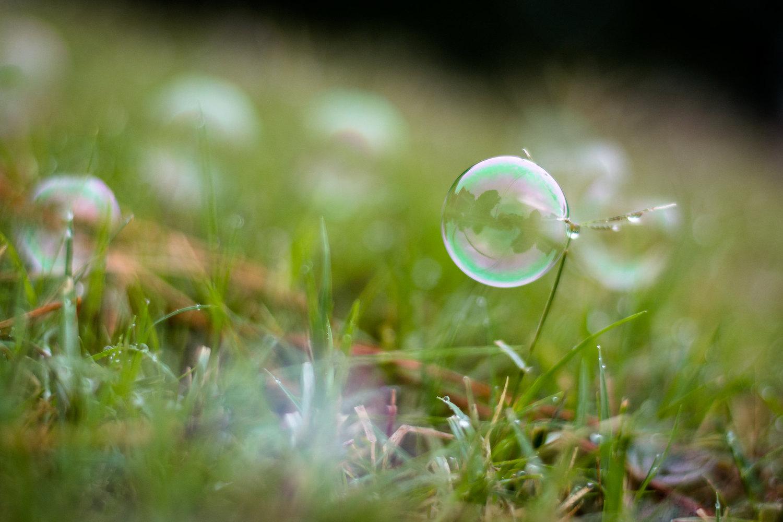 backyard photo safari bubble on grass