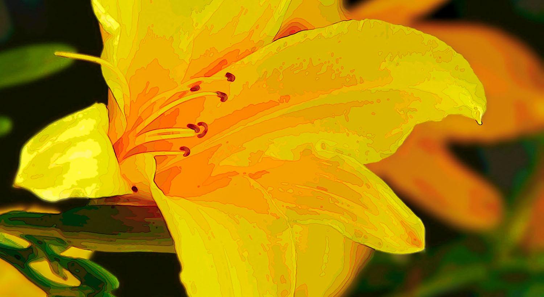 corona photography workflow - flower