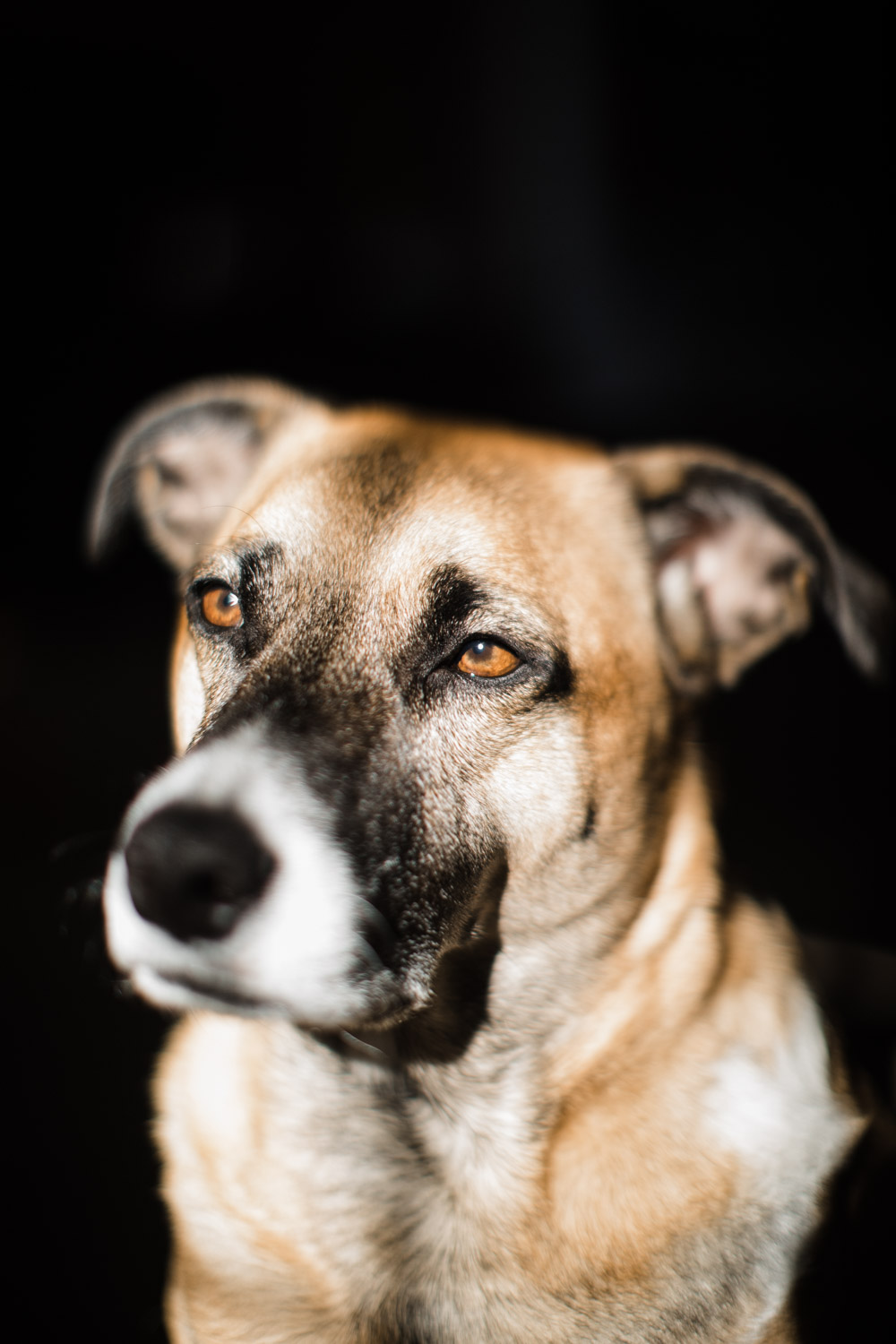 Freelensing for Creative Photography. Dog