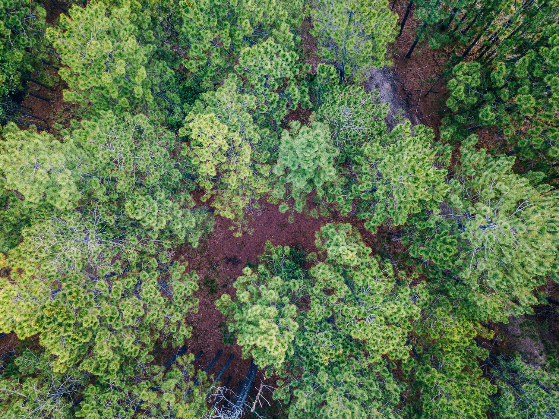 Texturas de uma floresta de pinheiros de Queensland.  Fotografia de Brisbane Drone por Matt Murray