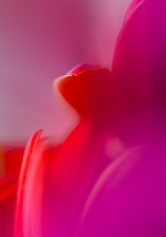 closeup macro de flores no modo de foco manual