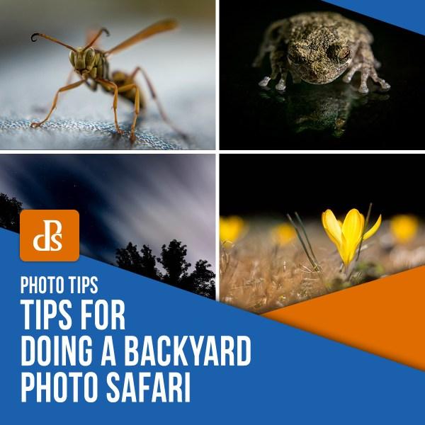 Tips for Doing a Backyard Photo Safari