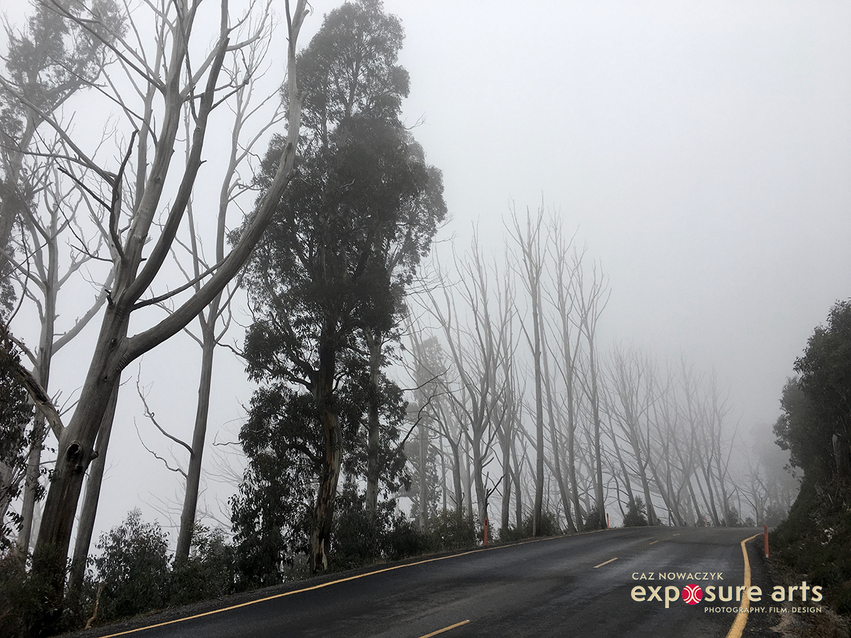 Fog on Mt Hotham, Victoria by Caz Nowaczyk