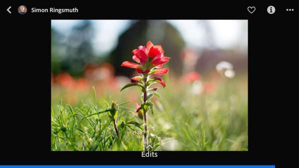 Become a Better Photo Editor with the New Lightroom Mobile 'Discover' Feature
