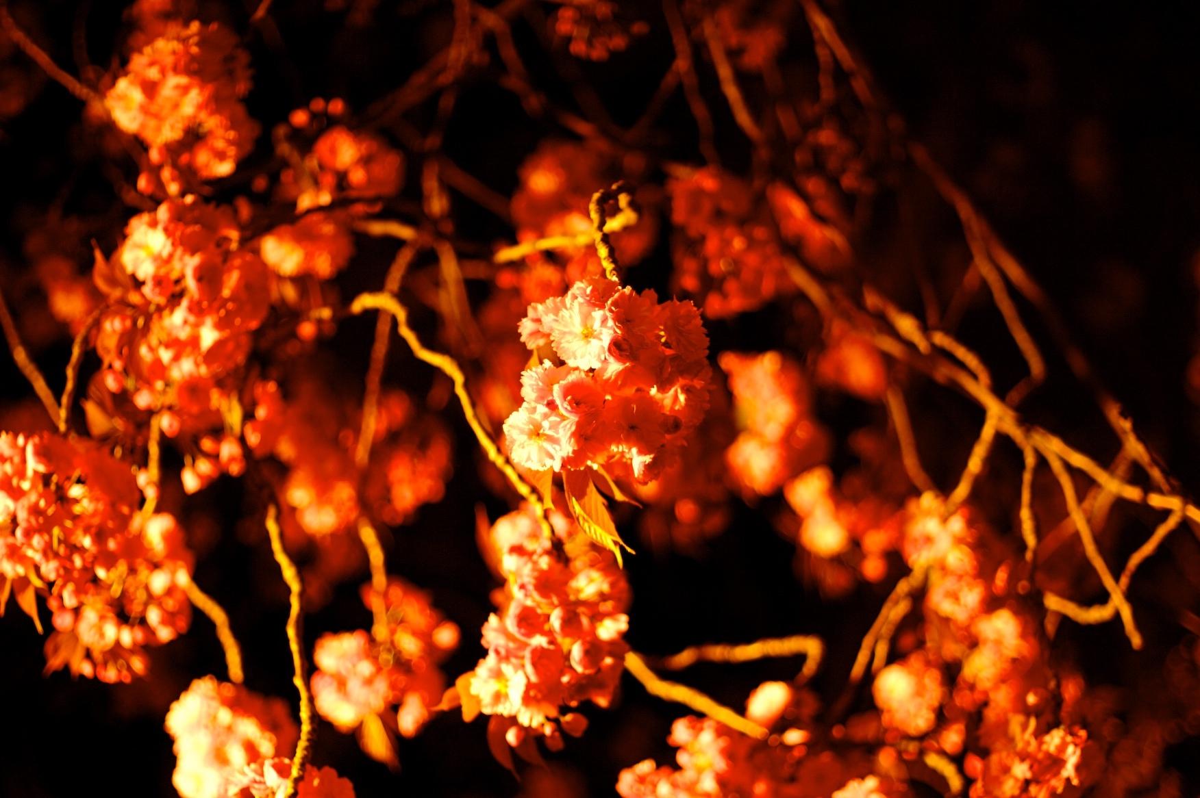 Desafio de Fotografia Semanal - Primavera