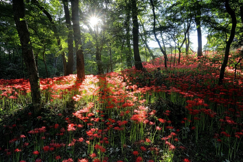 paisagem de flores