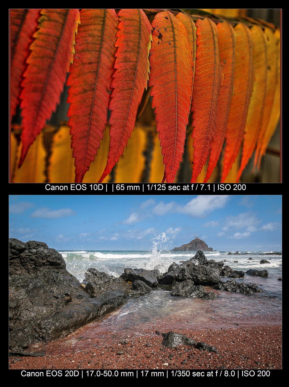 folhas e fotos da praia