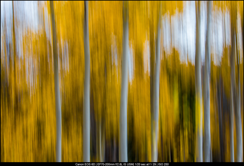 movimento intencional da câmera das árvores