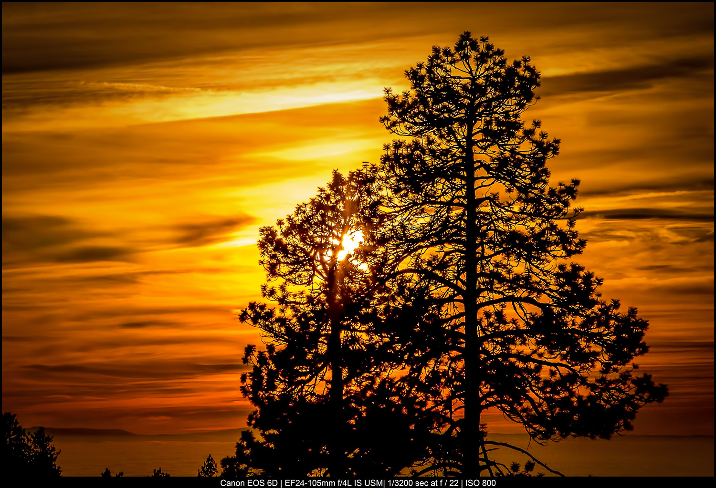 Belas artes Fotografia de paisagens - árvores ao nascer do sol
