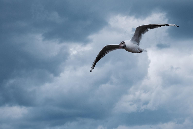 gaivota em um dia nublado
