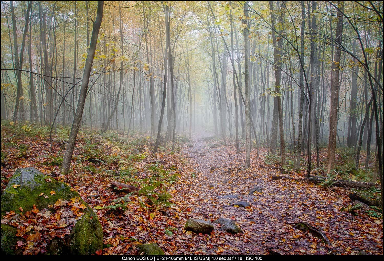 Fotografia de belas artes de paisagens - Vermont Misty Forest
