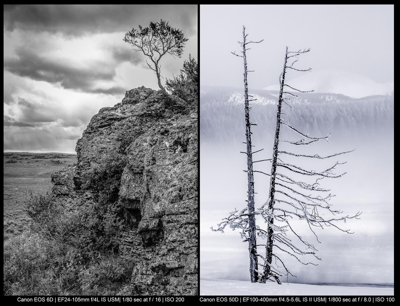 Imagens monocromáticas de uma árvore em um penhasco e uma árvore em Yellowstone.