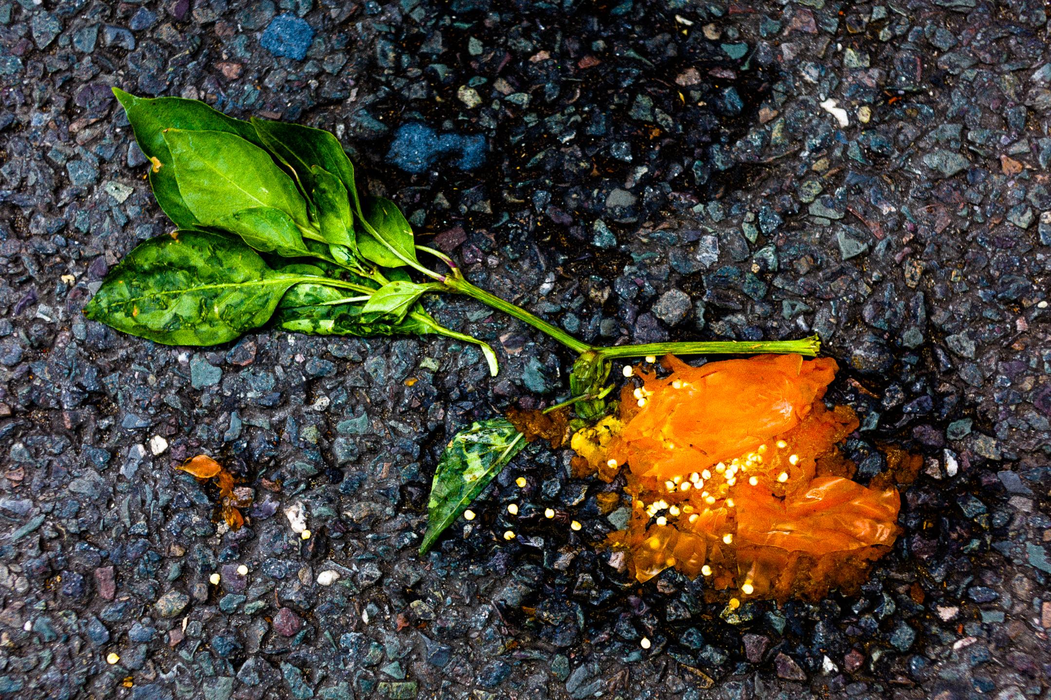 idéias de fotografia abstrata de plantas esmagadas