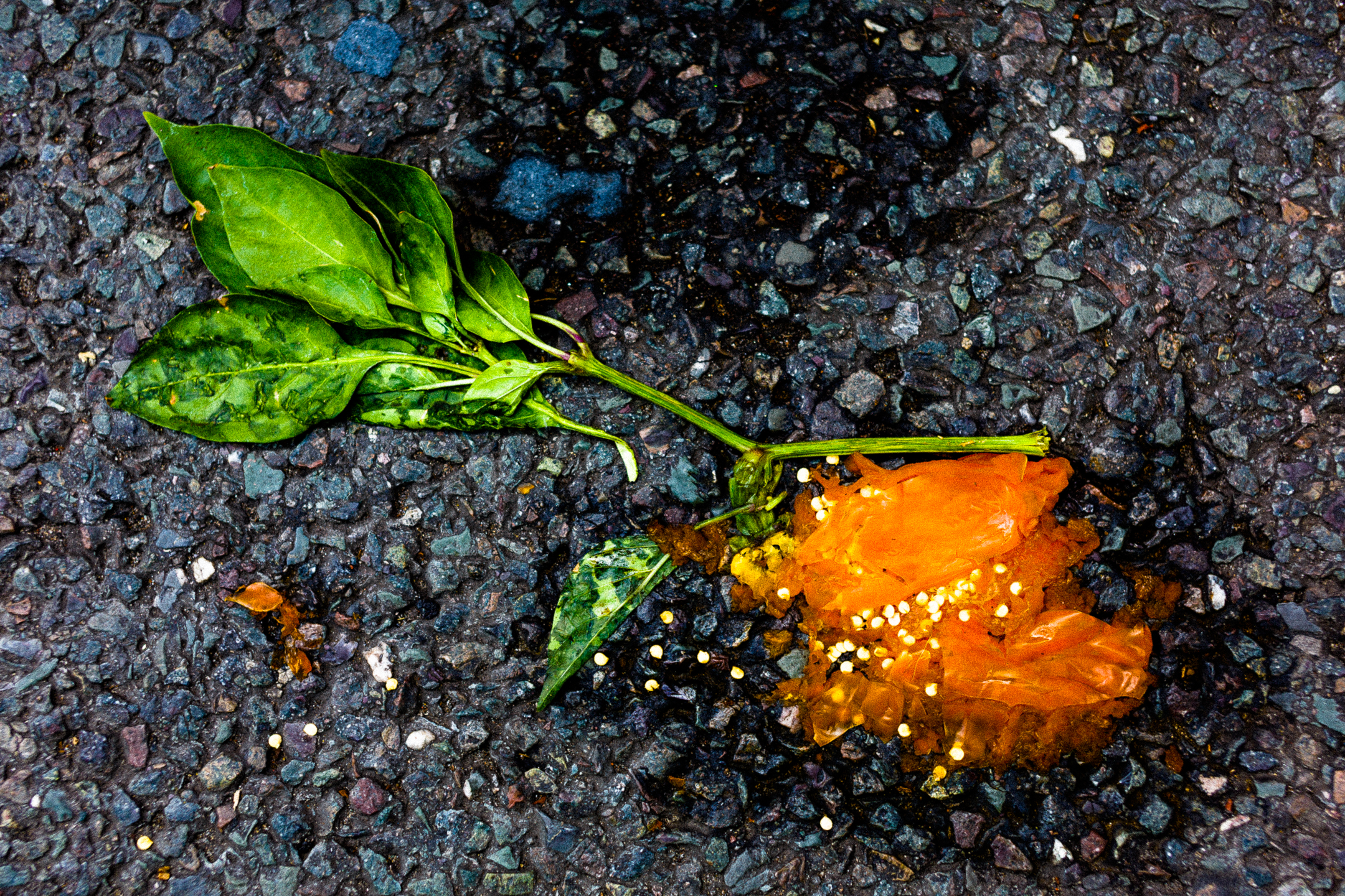 smashed vegetable abstract photography ideas