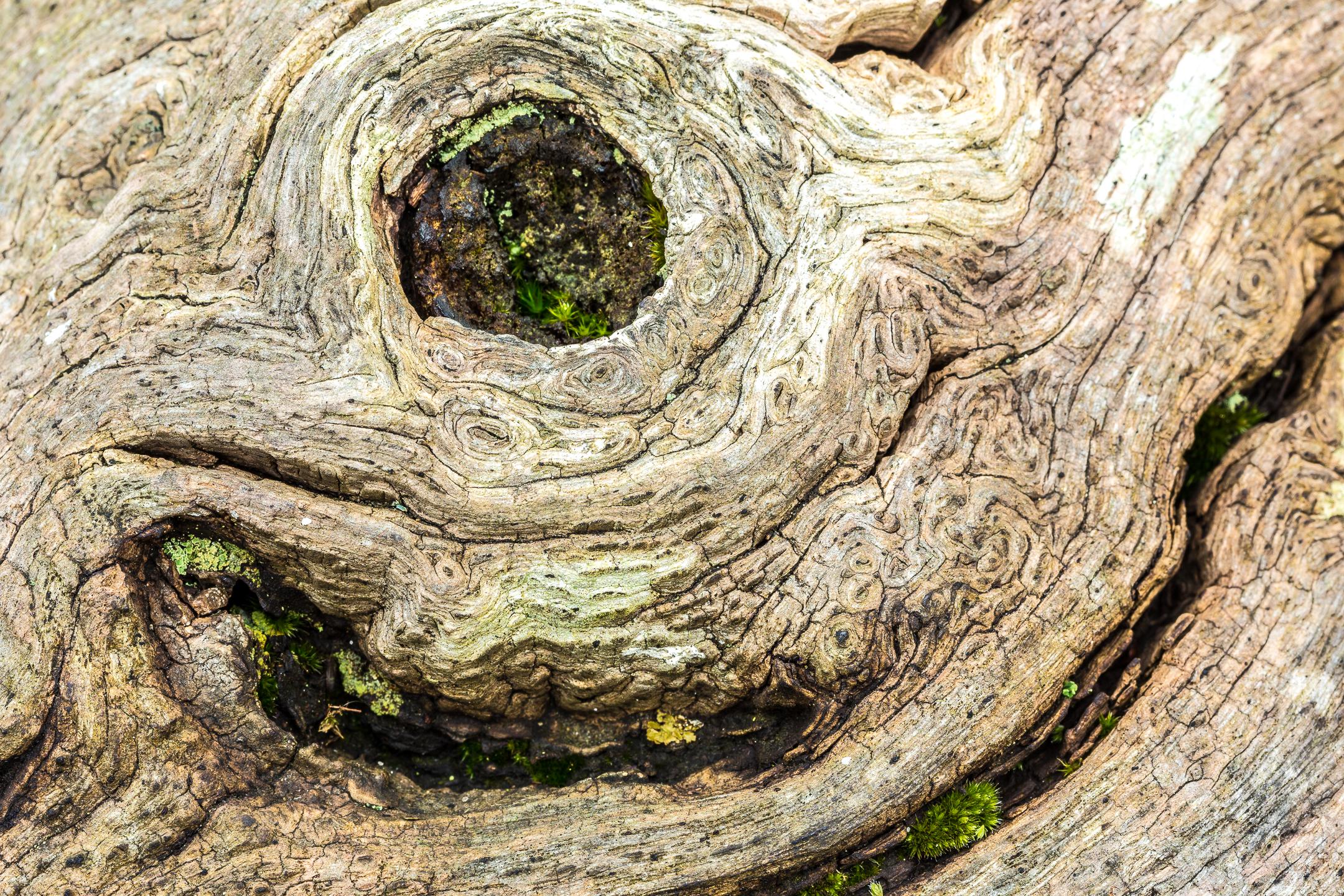 nós do tronco da árvore