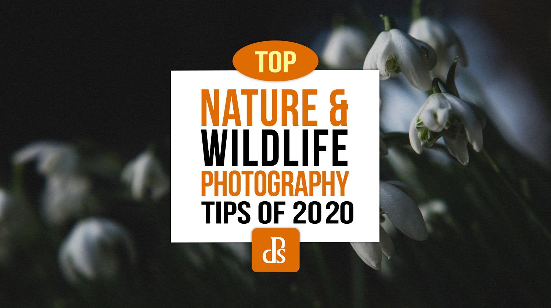 As melhores dicas para fotografia de natureza e vida selvagem de 2020