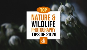 dPS Top Nature and Wildlife Photography Tips of 2020