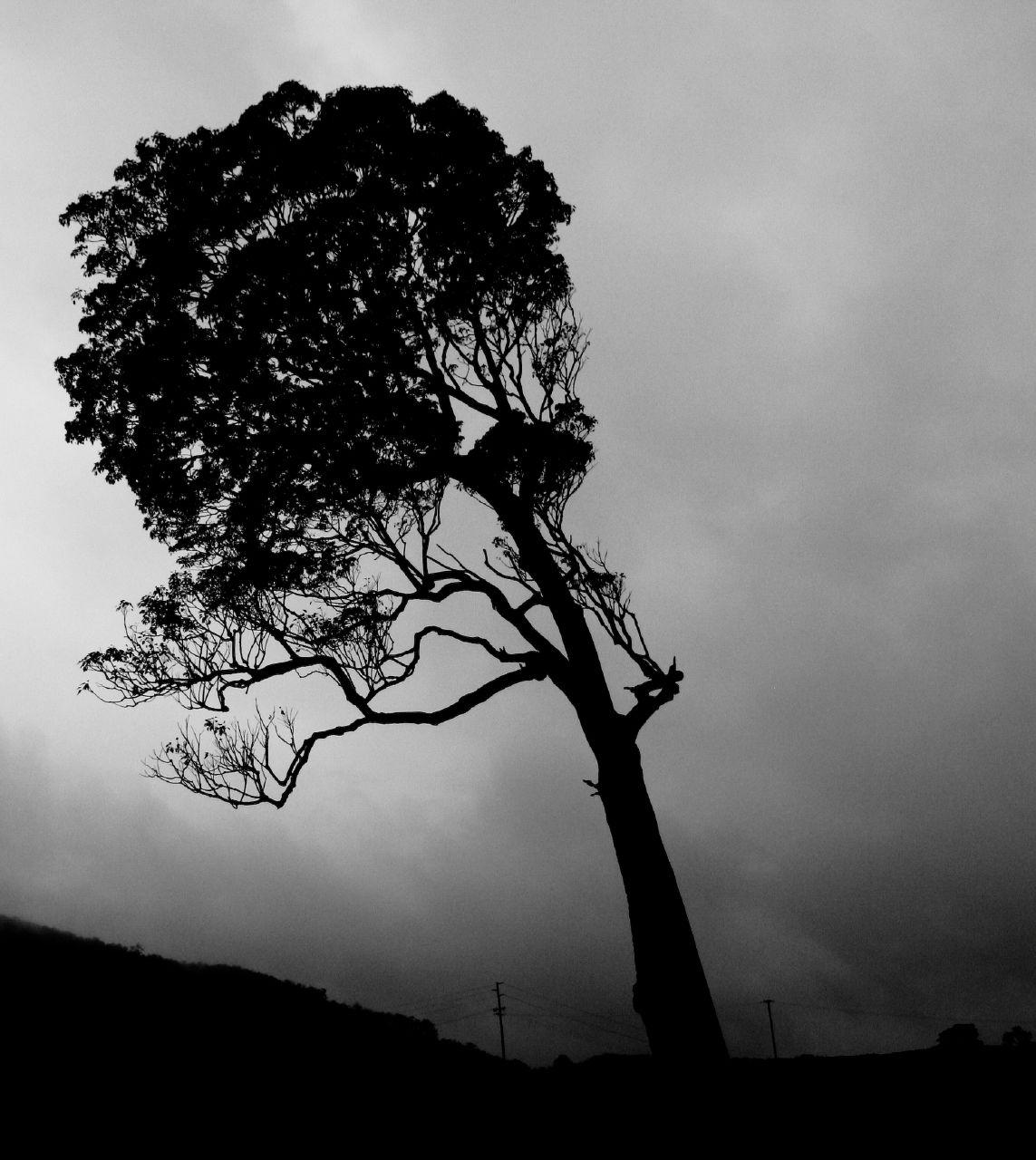Fotografia de árvore