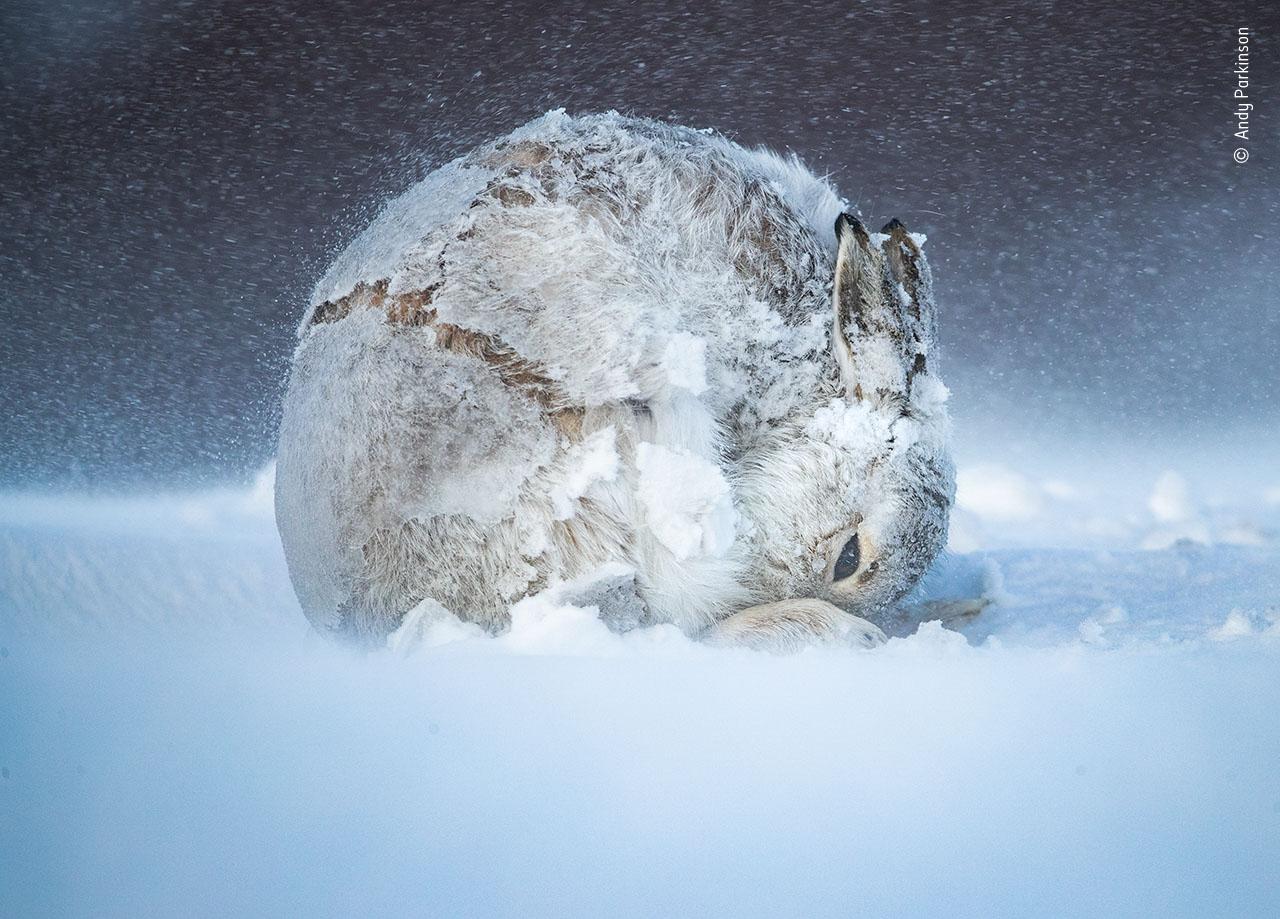 Andy Parkinson / Fotógrafo de Vida Selvagem do Ano