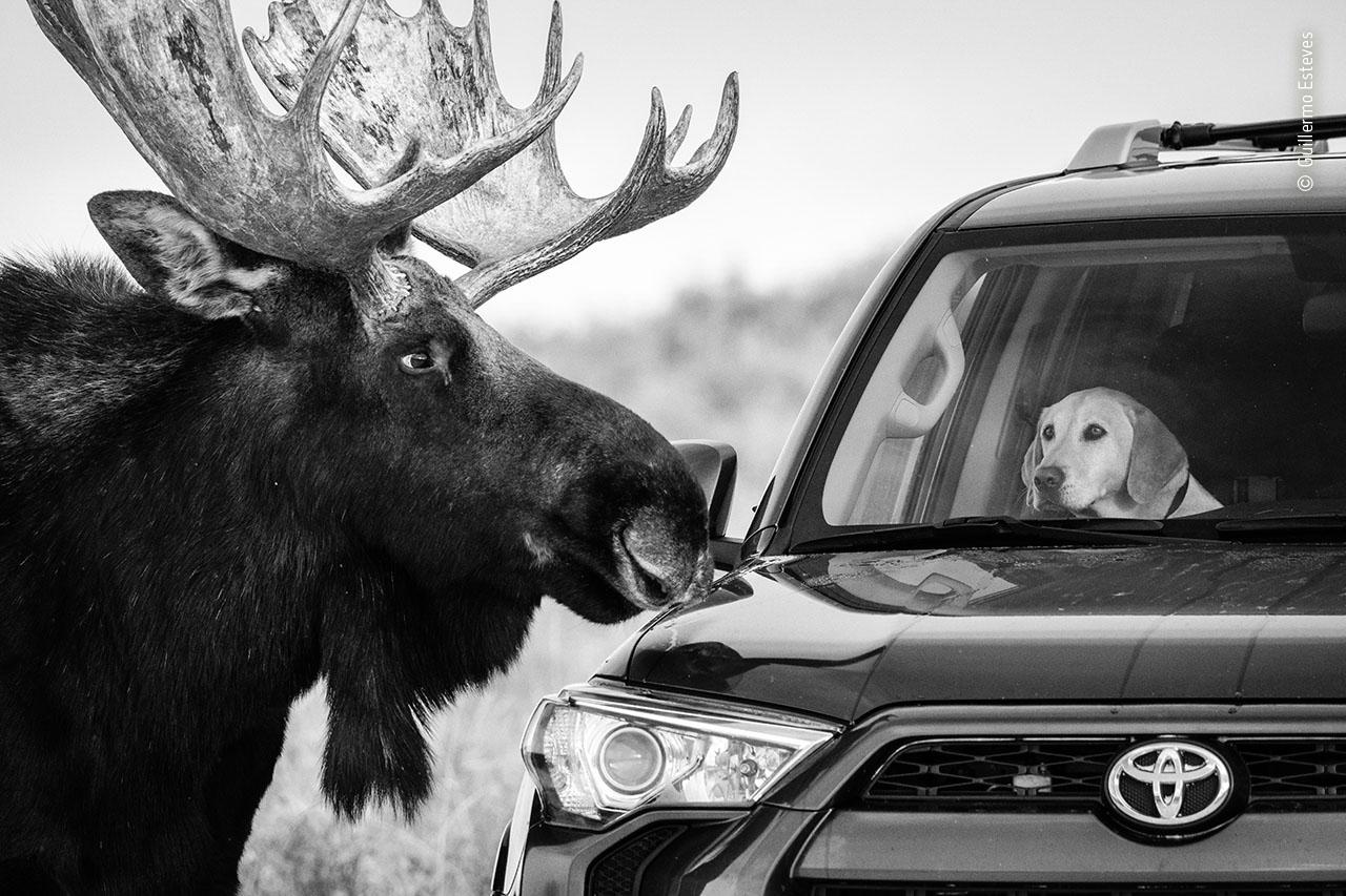 Guillermo Esteves / Fotógrafo de Vida Selvagem do Ano