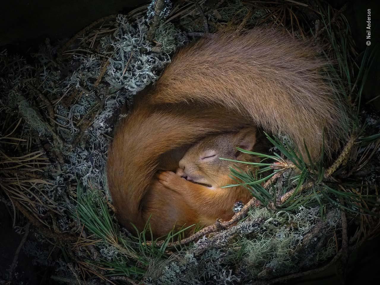 Neil Parkinson / Wildlife Photographer of the Year