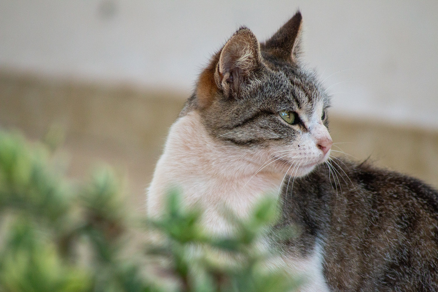 tight photo of cat looking away