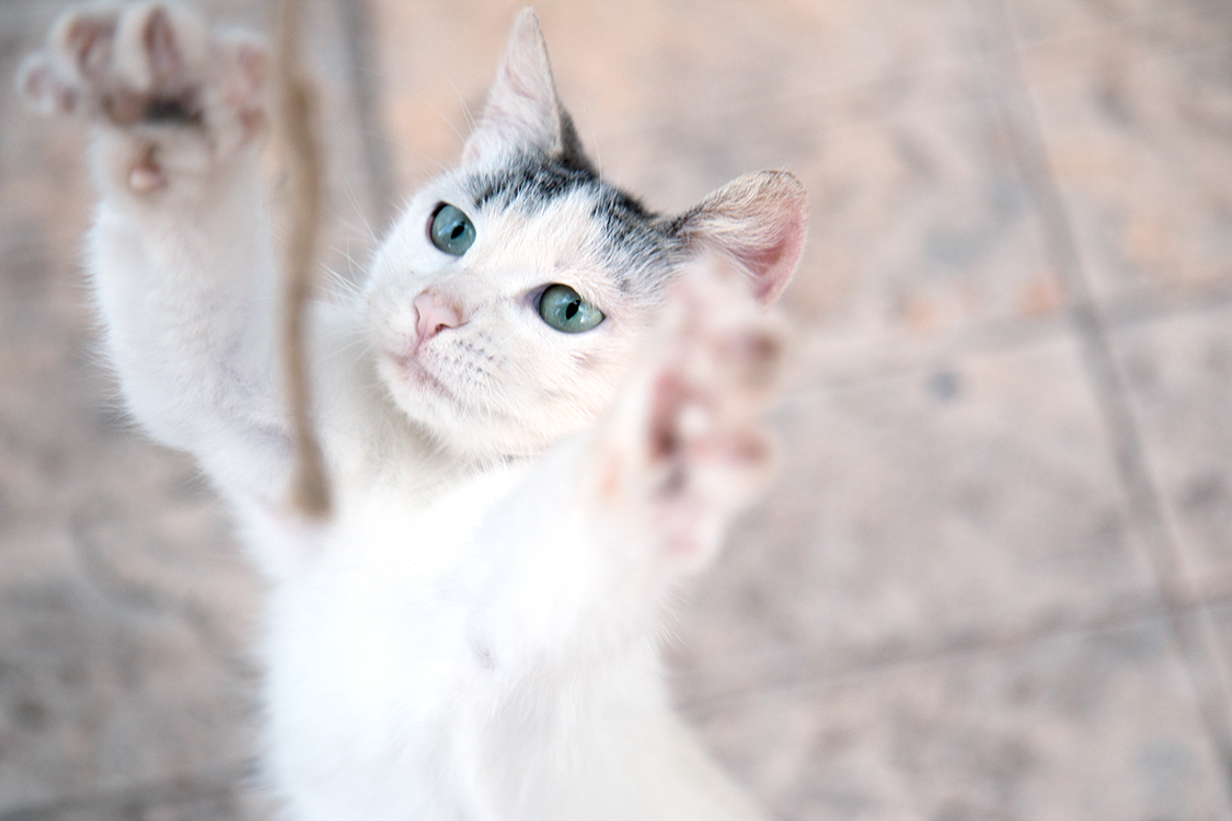 cat jumping up cat photography ideas