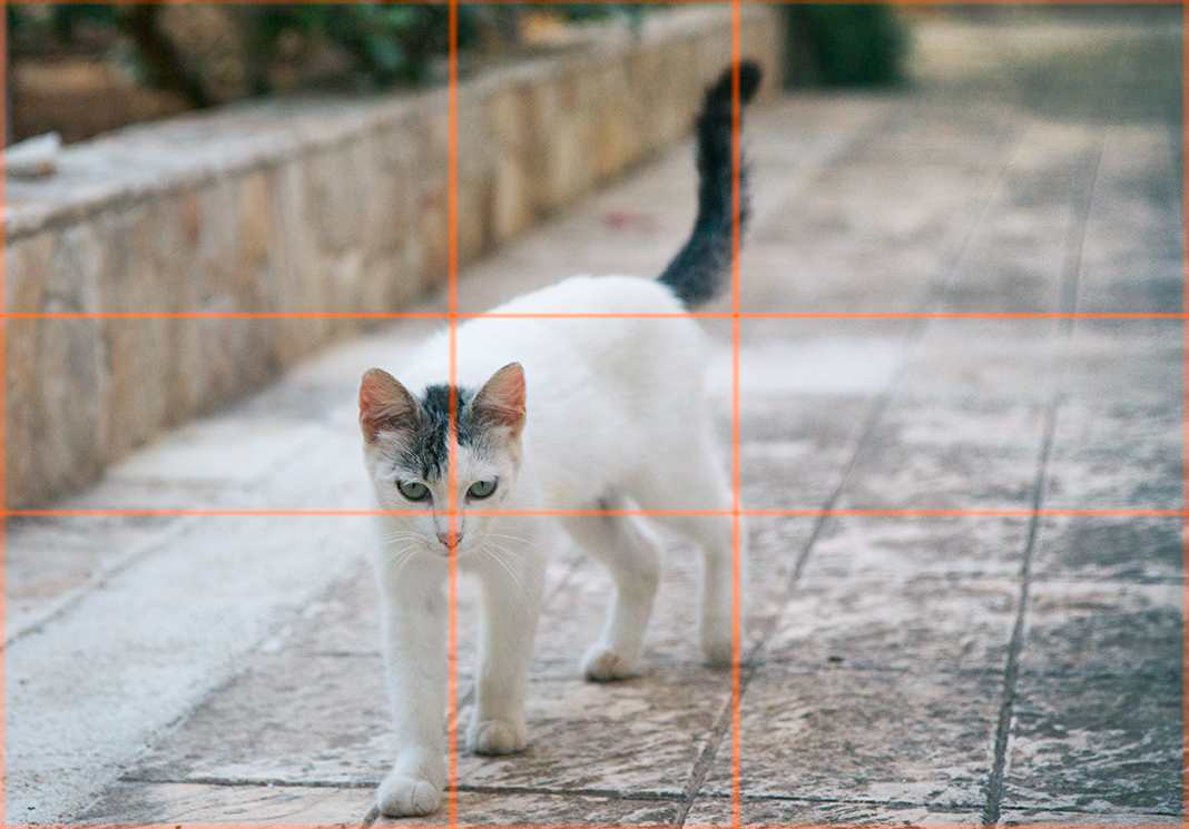 cat with rule of thirds overlay