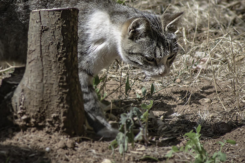 cat walking through brush outside
