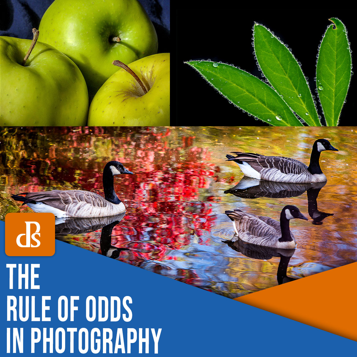 the rule of odds in photography