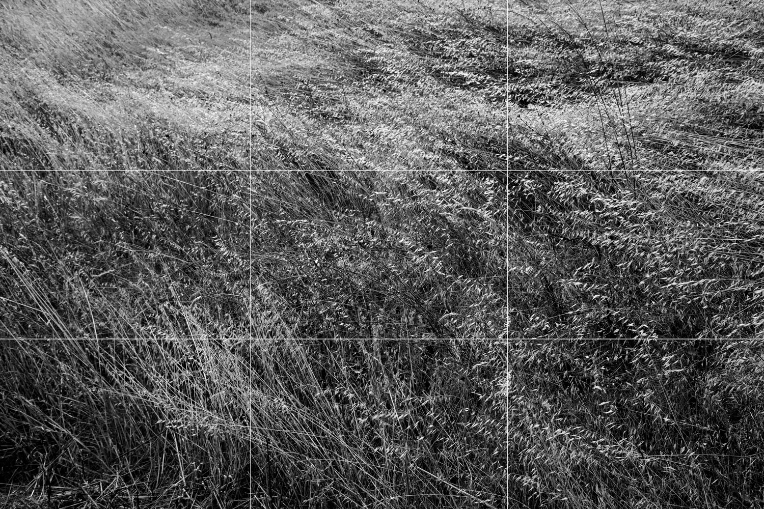 Rule of thirds examples a grassy field in black and white.