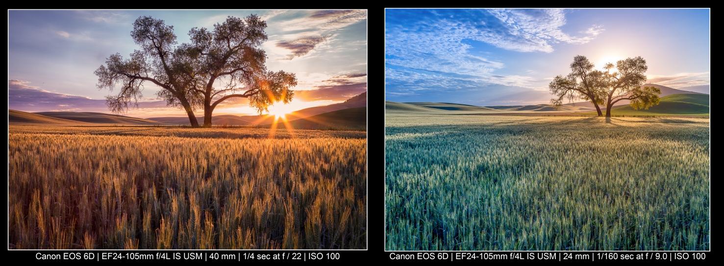 Árvores coloridas em um campo para fotografar paisagens
