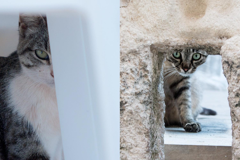 cat peering through items
